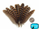 Natural Brown Partridge Wing Feathers