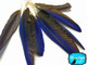 Shiny blue small parrot feathers