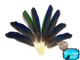 Blue And Green Amazon Tiny Parrot Wing Feathers