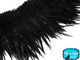 Jet black fluffy rooster feathers