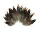 Brown colored golden tipped feathers