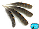 Natural colored unique craft feathers
