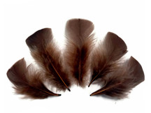 1/4 Lb - Coffee Brown Turkey T-Base Plumage Wholesale Feathers (Bulk)