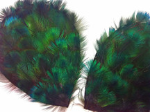 Shiny green and blue fluffy peacock feathers pieces