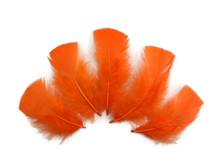 1/4 Lb - Orange Turkey T-Base Plumage Wholesale Feathers (Bulk)