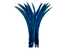 "5 Pieces - 25-30"" Turquoise Blue Zebra Lady Amherst Pheasant Tail Super Long Feathers"