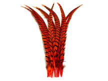 "5 Pieces - 25-30"" Orange Zebra Lady Amherst Pheasant Tail Super Long Feathers"