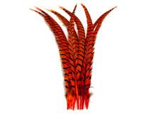 "5 Pieces - 25-30"" Orange Zebra Lady Amherst Pheasant Tail Super Long Feathers"