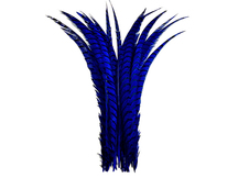"5 Pieces - 25-30"" Royal Blue Zebra Lady Amherst Pheasant Tail Super Long Feathers"