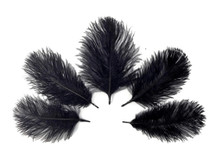 Wholesale Pack - Black Ostrich Small Confetti Feathers (Bulk)