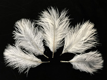 Wholesale Pack - Off White Ostrich Small Confetti Feathers (Bulk)