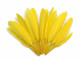 Long quill tip feathers dyed yellow