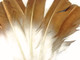 Beautiful gold and white turkey feathers. These feathers are long, stiff, and perfect for painting on. Other uses include costumes, cosplay, wings, and decor.