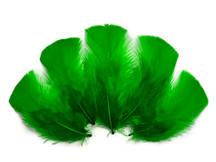 1/4 Lb - Kelly  Green Turkey T-Base Plumage Wholesale Feathers (Bulk)