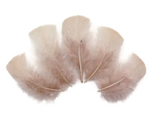 1/4 Lb - Nude Turkey T-Base Plumage Wholesale Feathers (Bulk)