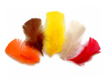 1/4 Lb - Fall Mix Turkey T-Base Plumage Wholesale Feathers (Bulk)