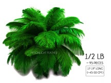"1/2 Lb - 17-19"" Kelly Green Ostrich Large Drab Wholesale Feathers (Bulk)"