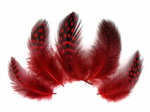 1/4 Lb - Red Guinea Hen Plumage Polka Dot Feathers Wholesale (Bulk)