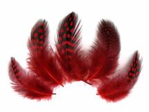 1/4 Lb - Red Guinea Hen Plumage Polka Dot Feathers Wholesale (Bulk)