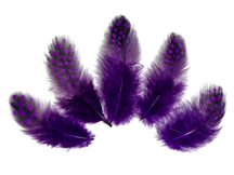 1/4 Lb - Purple Guinea Hen Plumage Polka Dot Feathers Wholesale (Bulk)