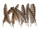 Natural Ringneck Pheasant Wing Round Quills Wholesale Feather (Bulk)