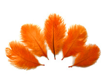 Wholesale Pack - Orange Ostrich Small Confetti Feathers (Bulk)
