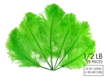 "1/2 Lb - 12-16"" Lime Green Ostrich Tail Wholesale Fancy Feathers (Bulk)"