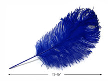 "10 Pieces -  12-16"" Royal Blue Dyed Ostrich Tail Fancy Feathers"