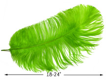 "2 Pieces - 18-24"" Lime Green Large Prime Grade Ostrich Wing Plume Centerpiece Feathers"