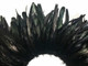 Dark colored sturdy long rooster feathers