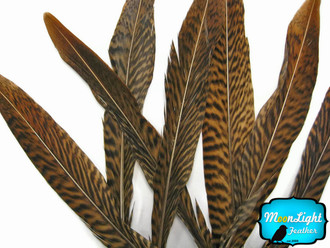 "4-6"" Natural Golden Pheasant Tail Feathers"