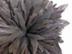 Dark gray fluffy rooster feathers