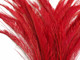 Bright red wispy peacock feathers
