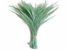 Aqua Green Bleached Peacock Swords Cut Wholesale Feathers (Bulk)