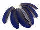 Blue and black small exotic feathers