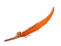 Orange Long Ostrich Nandu Trimmed Feathers