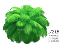 "1/2 Lb - 17-19"" Light Green Ostrich Large Drab Wholesale Feathers (Bulk) Swa"