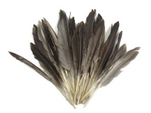 1/4 Lbs - Natural Brown Duck Pointer Primary Wing Wholesale Feathers (Bulk)