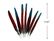 "Complete Set of 7 - 17-21"" Pieces of Scarlet Red Macaw Tail Super Long Feather -Rare-"