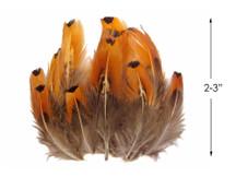 1/4 lbs. - Gold Ringneck Pheasant Plumage Wholesale Feathers (Bulk)