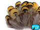 Fluffy yellow and brown pheasant feathers