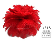 "1/2 Lb - 19-24"" Red Ostrich Drabs Wholesale Feathers (Bulk)"