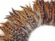 Red and brown fluffy strip of rooster feathers