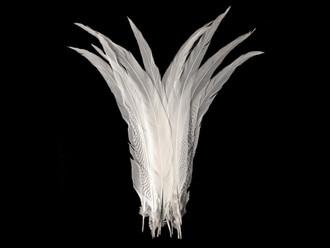 "25-30"" Natural Silver Pheasant Tail Super Long Feathers (Bulk)"
