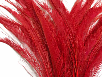 Red Bleached Peacock Swords Cut Feathers