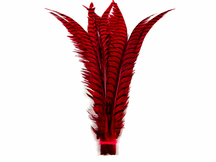 """5 Pieces - 25-30"""" Red Zebra Lady Amherst Pheasant Tail Super Long Feathers"""