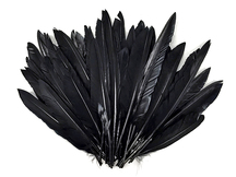 1/4 Lbs - Black Duck Pointer Primary Wing Wholesale Feathers (Bulk)