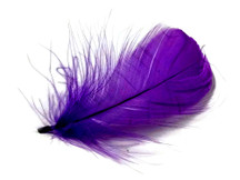 "1 Pack - 2-3"" Purple Goose Coquille Loose Feathers - 0.35 Oz."