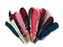 Collection 1 - Turkey Round and Pointer Feather Mix