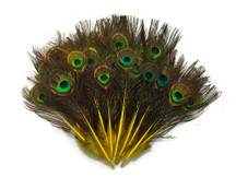 Yellow dyed natural colored small shiny peacock feathers
